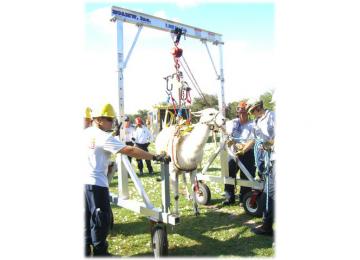 llama-rescue-1