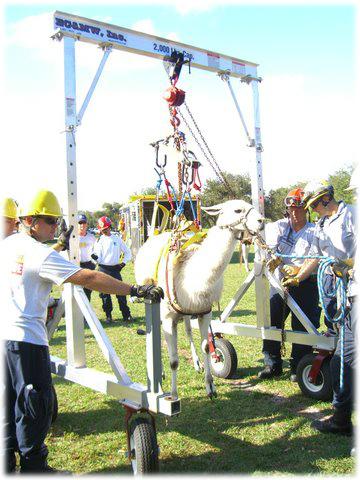 llama-rescue (1)