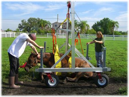 animal-rescue-crane